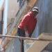 Avanza la restauración de fachadas en avenida Carranza